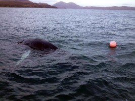 John McKinnon rescues whale from ropes